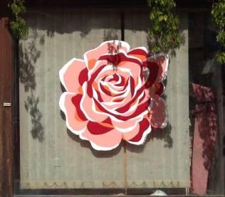 Improvisation rose